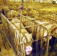 factory farming 1 images